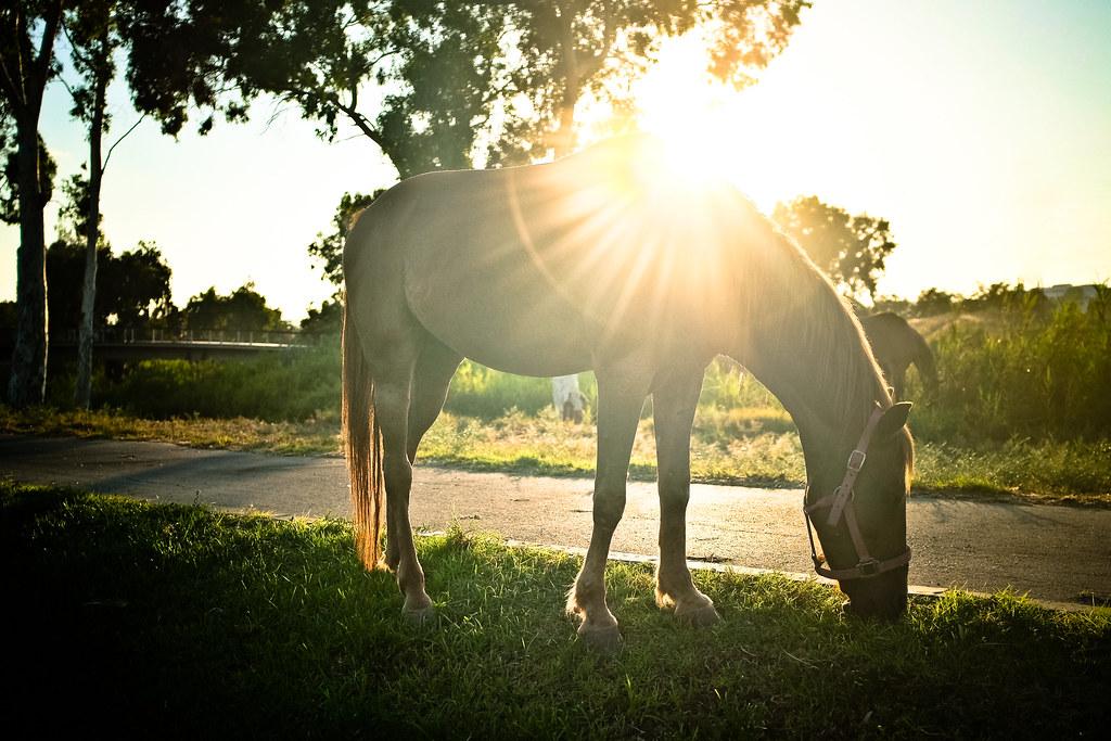 Imagen gratis de un caballo alimentándose