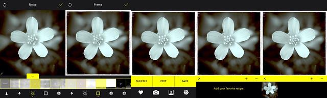 Camera Roll-4628