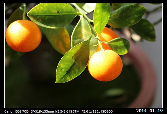 20140119_Orangess