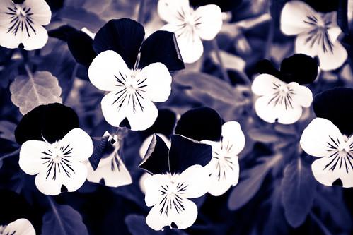 i'll remember april by Antonio_Trogu
