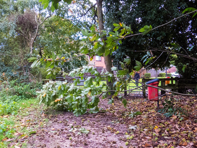 Branch blocking the entrance to Upton Heath