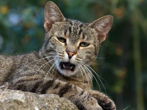 Street cat 08