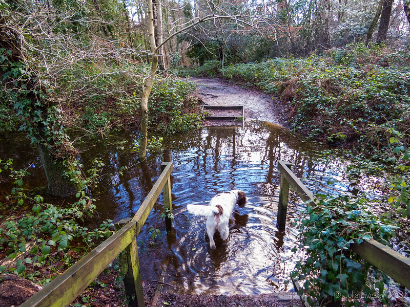 The Gravel Hill entrance to Canford Heath is flooded again