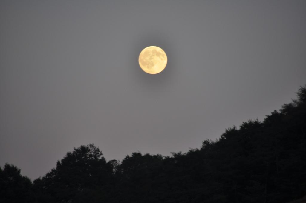 4. Noche de brujas en el bosque navarro. Autor, Dorron