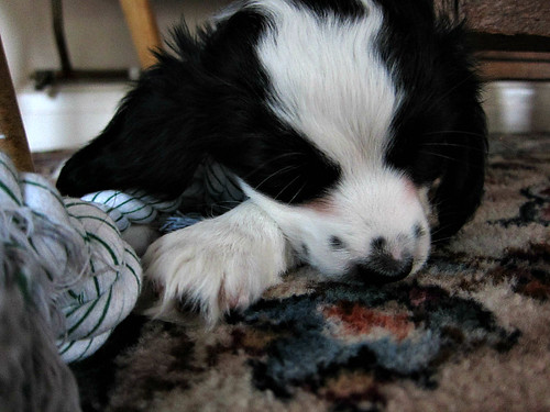 Barney sleeping