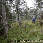 02 Viajefilos en Australia. Barrington NP 24