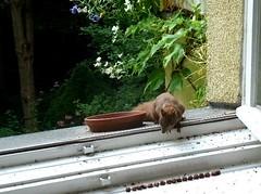 Eichhörnchen 3.3