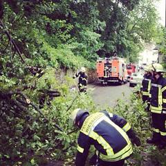 Umgestürzter Baum Am Heienberg 31.03.13