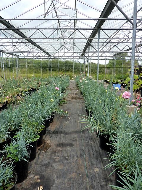 John_Barrington's_ greenhouse