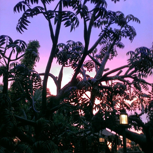 Tarzan's Treehouse #Disneyland #sunset #nofilter