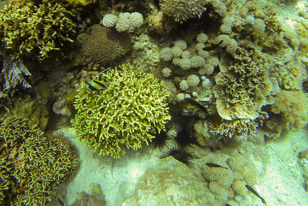 Sabang, La Laguna, Puerto Galera, Oriental Mindoro, Diving, Action Divers, Photography, Travel