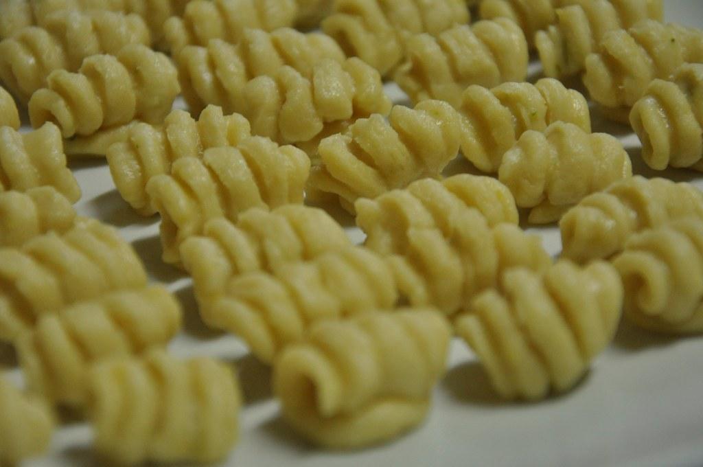 Gorgorya Shells