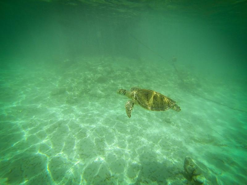 Snorkeling in Akumal-5