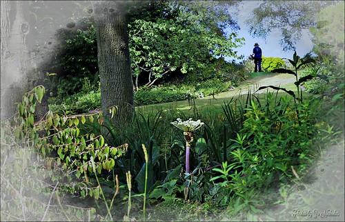 Beth Chatto Gardens 2013 by Zo Nicholas