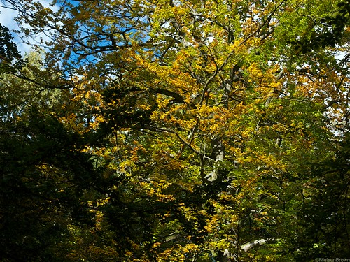 Changing colours Furesø