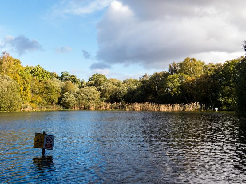 Sunlight on Creekmoor Ponds