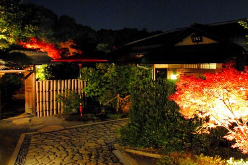 Shirotori Fall Lightup 027r