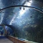 Oceanografic Miguel, acuario 03