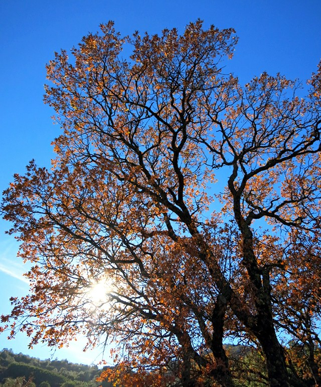 Fall branches