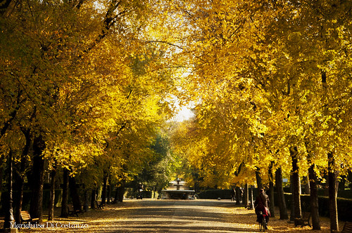 Autunno giallo by Mary-Eloise