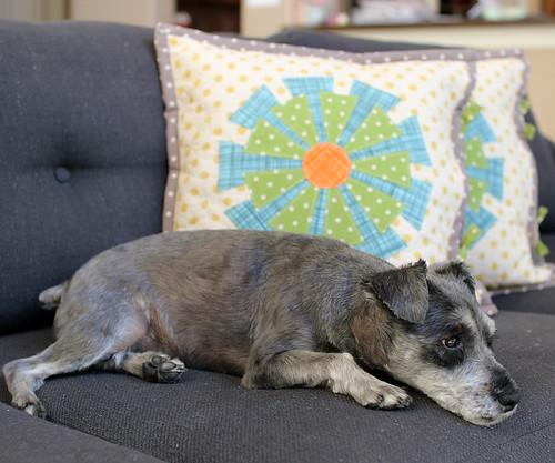 daisy cushions