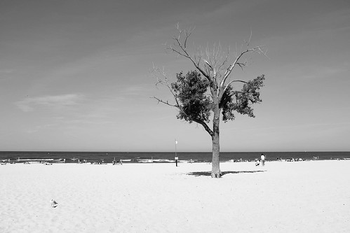 Holland Tree