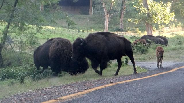 DSC06646 240813 Lone Elk Park