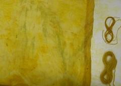 Goldenrod dyepots