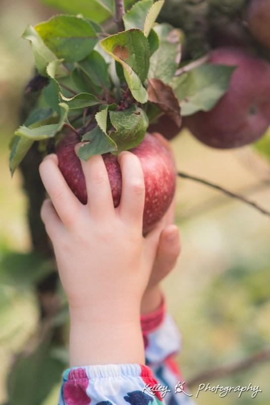 9/365 - Apple picking