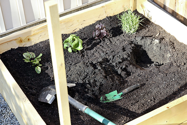 planting the herb garden