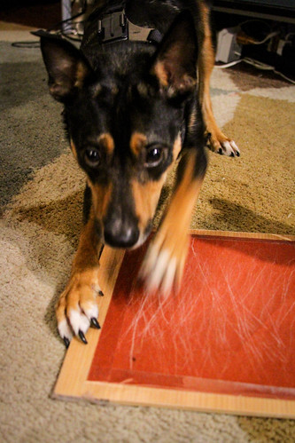 Image result for dog nail board