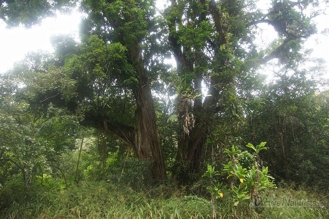 forest 0000 Na'ili'ili-haele, Maui, Hawaii, USA