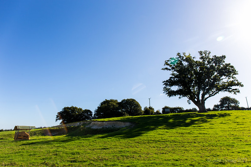 Sunlight and Shadows on Kings Down Farm