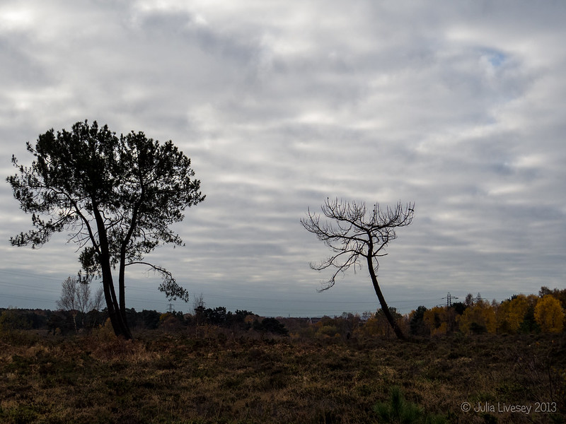 A bit of a cloudy day on Upton Heath