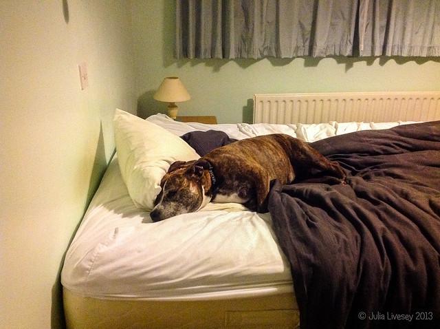 Jez settles herself on Chris' bed at bedtime