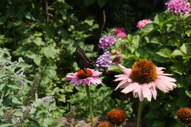 Making use of the butterfly garden
