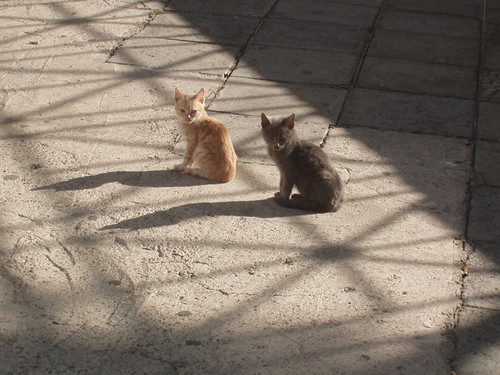 201312060077_Nicosia-young-cats copy