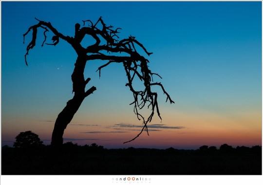 De twee heldere planeten aan de Westelijke horizon, een uur na zonsondergang.