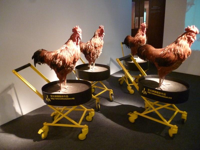 Chickens at the Hong Kong Museum of Art