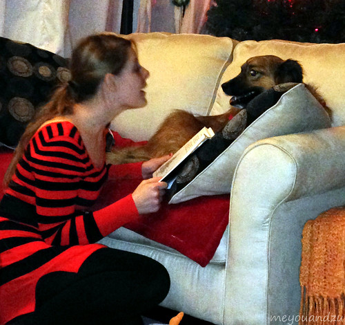 Christmas Dog reading