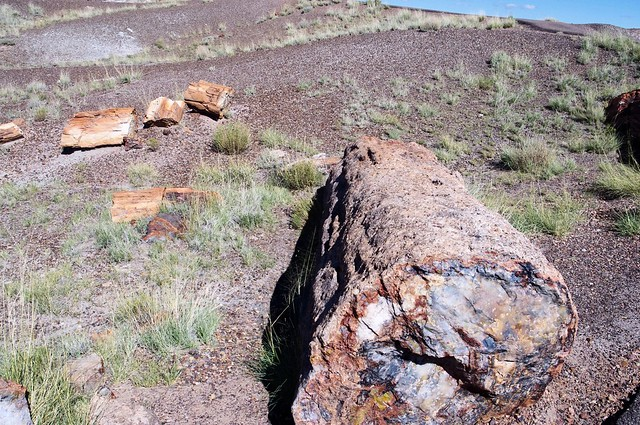 Petrified Wood, Petrified Forest National Park, Arizona, October 8, 2011
