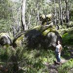 06 Viajefilos en Australia. Cathedral Rock NP 34