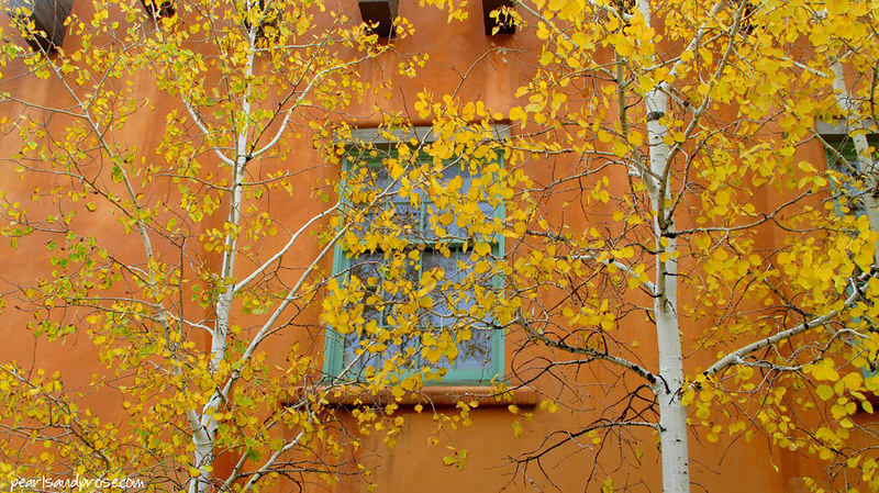 SF_birches_web