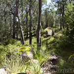 06 Viajefilos en Australia. Cathedral Rock NP 30