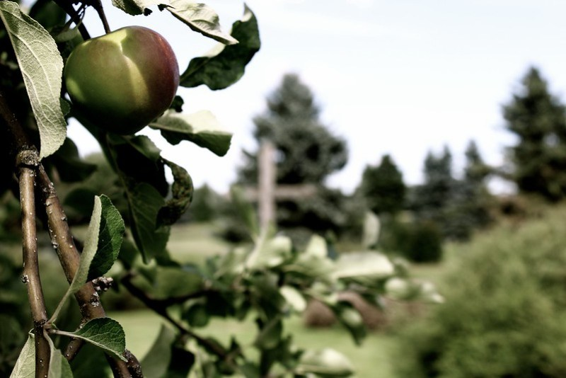 Apple and the cross