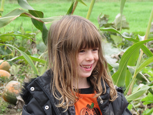 In a Pumpkin Field