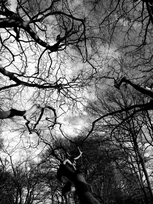 Black and white trees photo