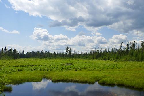 Daks: Bloomingdale Bog