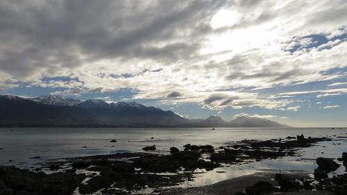 the bay at kaikoura