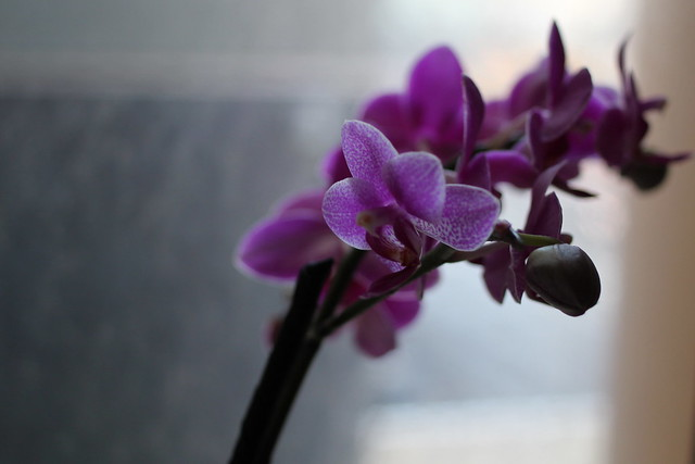 Tuesday: new orchids